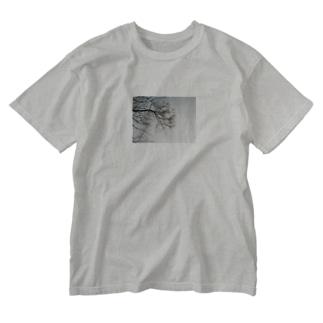 センダンTシャツ Washed T-shirts