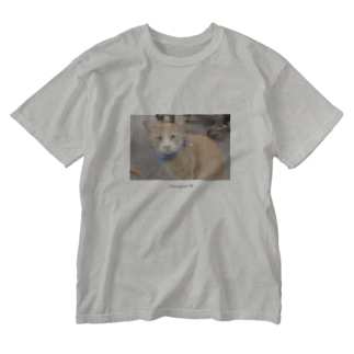 Chiengmai 01 / cat Washed T-shirts