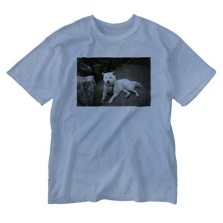 teshima no inu Washed T-shirts