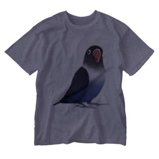 ボタンインコ おすましコバルトブルー【まめるりはことり】 Washed T-shirts