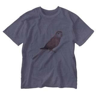 アキクサインコ ピンク【まめるりはことり】 Washed T-shirts
