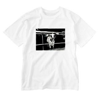 牛 Washed T-shirts