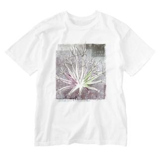 サボテン 晃山(背面プリント無し版) Washed T-shirts