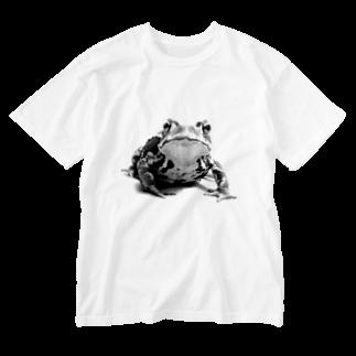 RICのアズマヒキガエル   Washed T-shirts