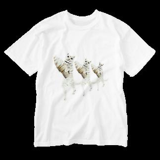 Rock catのソフトクリームCAT Washed T-shirts
