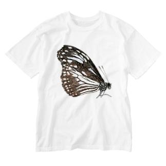 アサギマダラ  Washed T-shirts