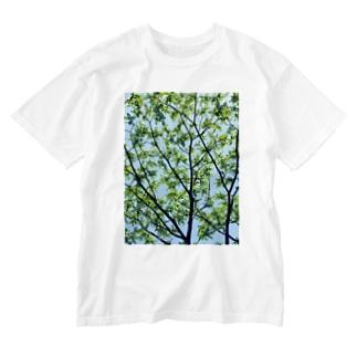 森林浴🌲 Washed T-shirts