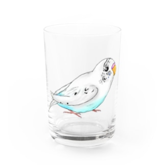 セキセイインコのピーコちゃん Water Glass