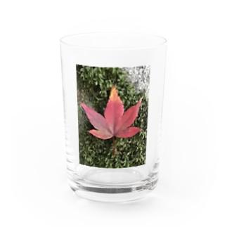 momijiee Water Glass