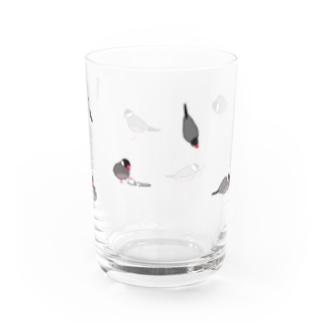 kfkxのサクラブンチョウ Water Glass