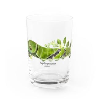 クロアゲハイモムシ Water Glass