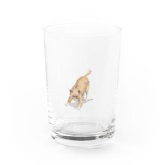 Olu 'OluのAngry cat Water Glass