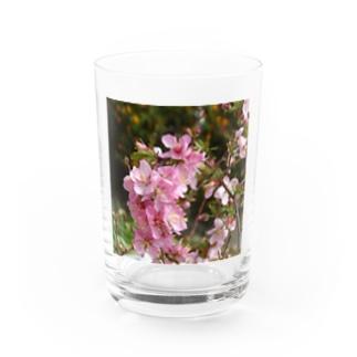 日本の花:ユスラウメ? Nanking cherry flowers (?) Water Glass