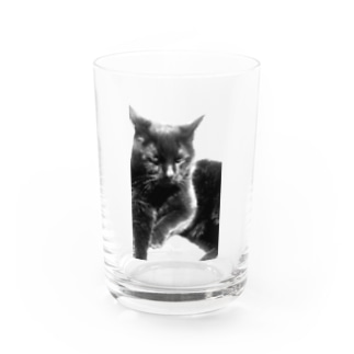neko no meeko Water Glass
