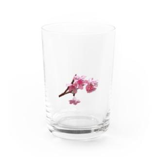 サクラNAKIJINSON Water Glass