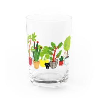 本田亮のshokubutsu Water Glass