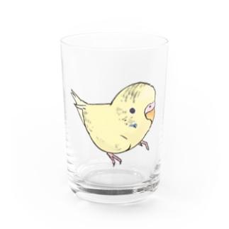 可愛いセキセイインコ おすましちゃん【まめるりはことり】 Water Glass