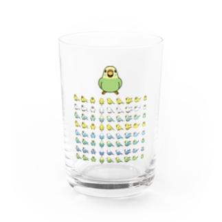 整列セキセイインコ隊【まめるりはことり】 Water Glass