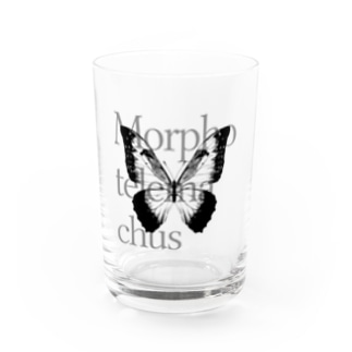 Morpho telemachus Water Glass