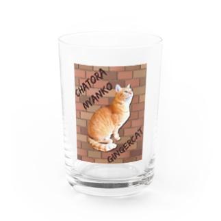 茶トラにゃんこ Gingercat 文字入り Water Glass