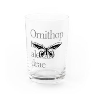 Ornithoptera alexandrae Water Glass