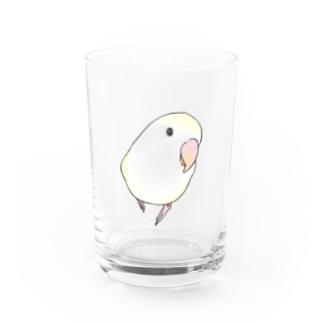 まめるりはことりのコザクラインコ バイオレットパイドちゃん【まめるりはことり】 Water Glass