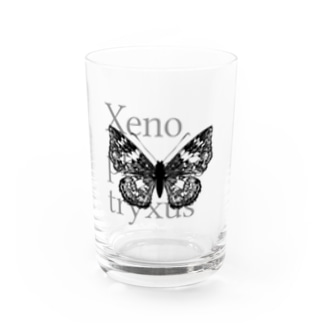 Xenophanes tryxus Water Glass