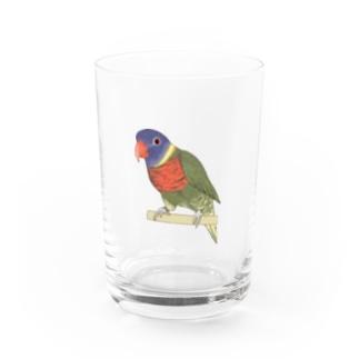 まめるりはことりの色合いが綺麗なゴシキセイガイインコちゃん【まめるりはことり】 Water Glass