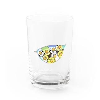 三密です!むちむちセキセイインコさん【まめるりはことり】 Water Glass