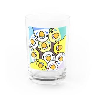 みっちりむっちり過密セキセイインコさん【まめるりはことり】 Water Glass