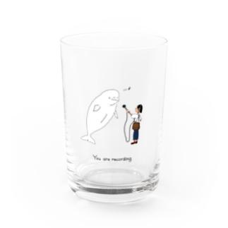 シロイルカレコーディング Water Glass