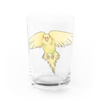 まめるりはことりの可愛いセキセイインコのぴーたんちゃん【まめるりはことり】 Water Glass