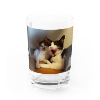 しまいにゃり Water Glass