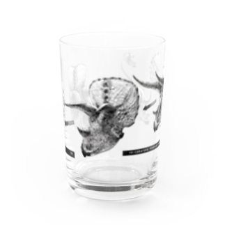 Triceratops prorsus growth series Water Glass