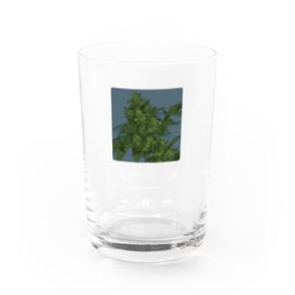 #KUSH Water Glass