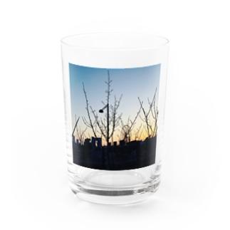 青春の夜明け Water Glass