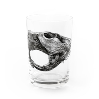 Castoroides ohioensis Water Glass
