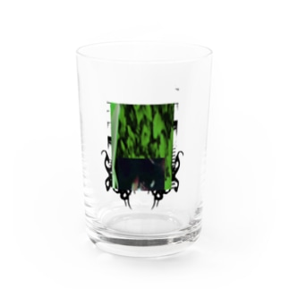 collagetribe Water Glass