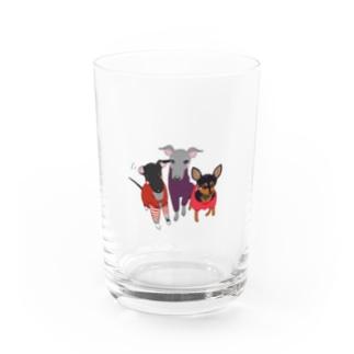 「保護犬カフェ支援」グッズ ねねさん茶々さんももさん 〜イタグレ&ミニピン〜 Water Glass