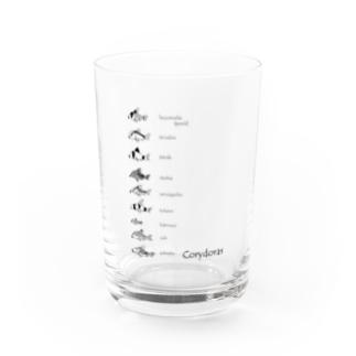 コリドラス大集合-Corydoras- Water Glass