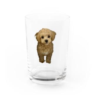 愛犬のちゃい Water Glass