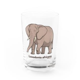 グッズ: アフリカゾウ-生物図鑑- Water Glass