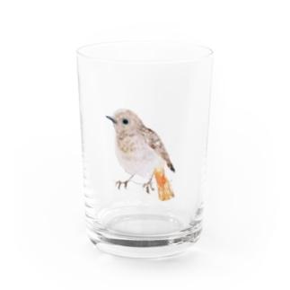 ジョウビタキ Water Glass