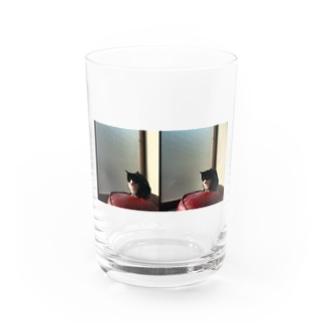 窓際のねこ Water Glass