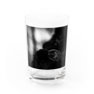 聞こえる Water Glass