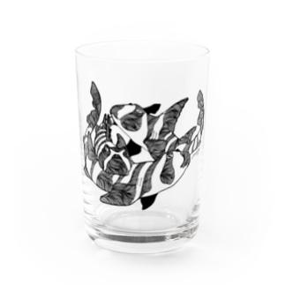 ネコザメ Water Glass