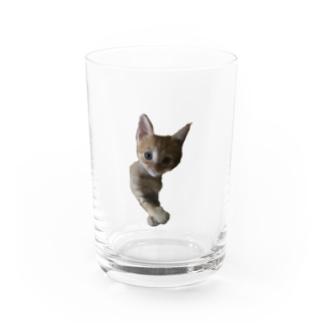 チャム幼少期 Water Glass