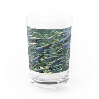 群れ Water Glass