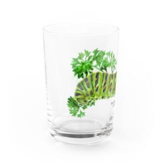 キアゲハイモムシ Water Glass