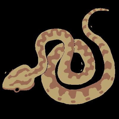絵柄:両生爬虫類